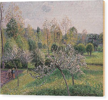 Apple Trees In Blossom Wood Print by Camille Pissarro