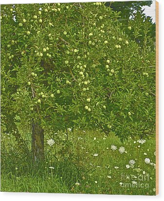 Apples In The Wild Wood Print