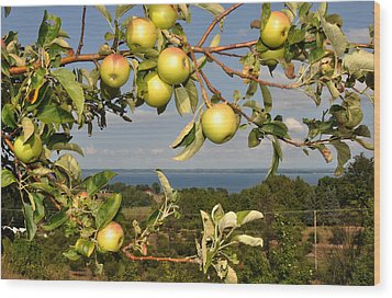 Apples Over Grand Traverse Bay Wood Print by Diane Lent