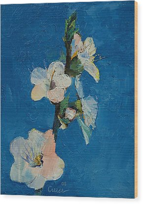 Apricot Blossom Wood Print by Michael Creese