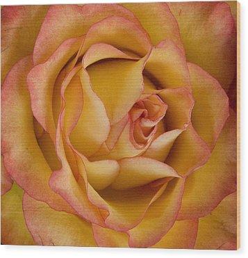 Apricot Rose Wood Print by Michael Friedman