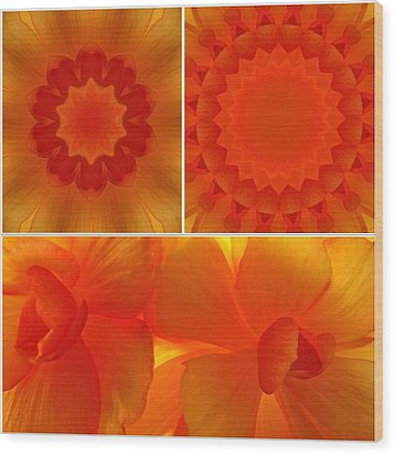 Apricot Wood Print by Tom Druin