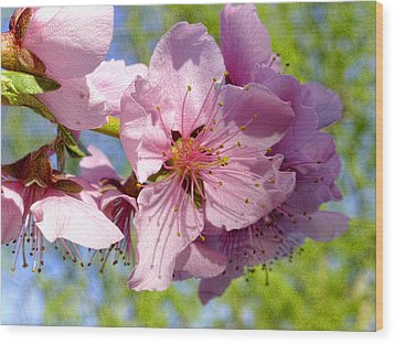 April Peach Blossoms Wood Print