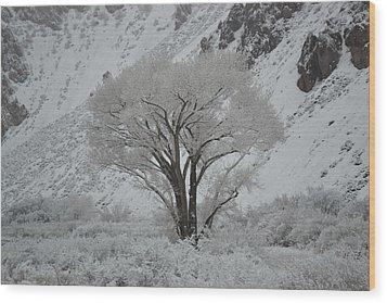 April Snow In Utah - Tree Wood Print