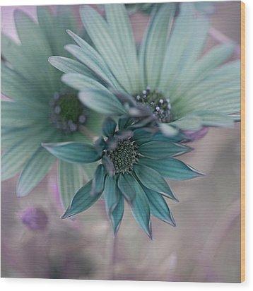Aqua Gerberas Wood Print by Bonnie Bruno