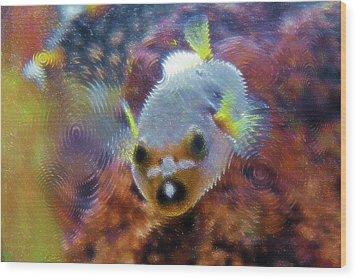 Aquarium Art 16 Wood Print by Steve Ohlsen