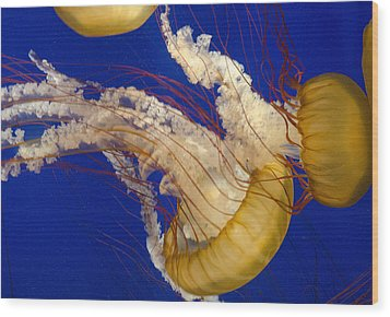 Aquatic Ballet Wood Print by George Hawkins