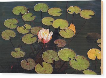 Aquatic Garden With Water Lily Wood Print