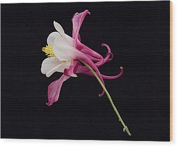 Wood Print featuring the photograph Aqulegia Hybrid 01 by Paul Gulliver
