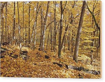 Arboretum Trail Wood Print