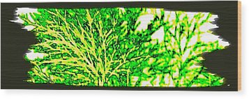 Arbres Verts Wood Print by Will Borden