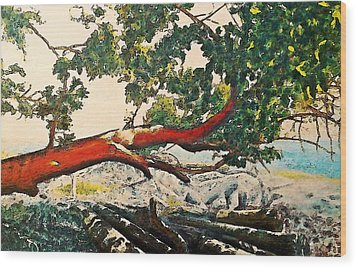 Arbutus Over Beach Wood Print