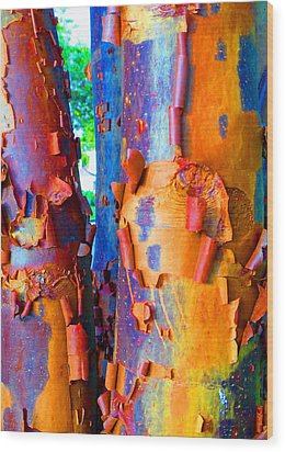 Arbutus Tree Summer Wood Print