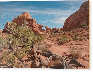 Arches National Park Wood Print by Donald Fink