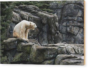 Arctic Bear Wood Print