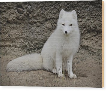 Arctic Fox Wood Print by Athena Mckinzie
