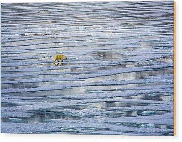 Arctic Journey Wood Print
