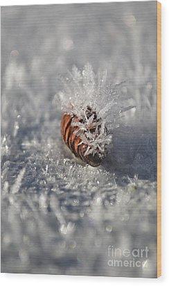 Arctic Pine Cone Porcupine Wood Print