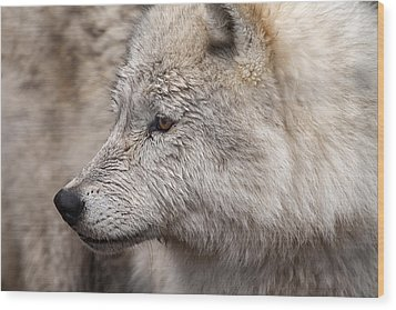 Arctic Wolf Wood Print by Eunice Gibb