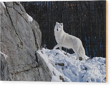 Wood Print featuring the photograph Arctic Wolf On Rock Cliff by Wolves Only