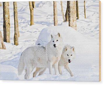 Arctic Wolves Wood Print by Cheryl Baxter