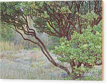 Wood Print featuring the photograph Arctostaphylos Hybrid by Kate Brown