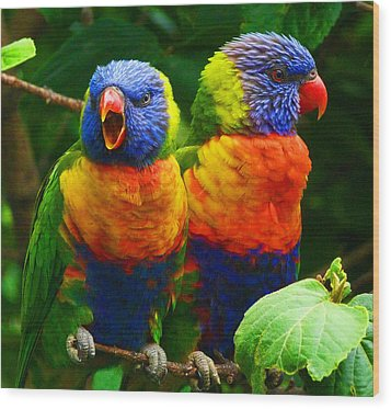 Are You Listening - Rainbow Lorikeets Wood Print