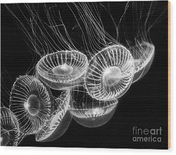 Area 51 - Moon Jellies Aurelia Labiata Wood Print by Jamie Pham