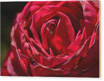 Arizona Rose I Wood Print