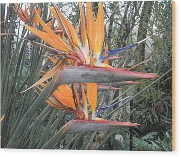 Army Of Birds Wood Print