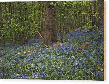 Around A Tree Wood Print by Svetlana Sewell