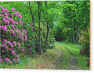 Around The Bend Wood Print by Kenny Francis