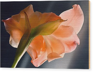 Art Of Gladiolus. Wood Print by Terence Davis