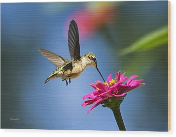 Art Of Hummingbird Flight Wood Print by Christina Rollo