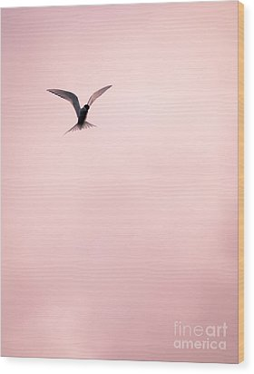 Wood Print featuring the photograph Artic Tern High In The Sky by Peta Thames