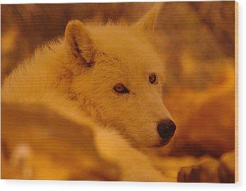 Artic Wolf  Wood Print by Jeff Swan
