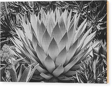 Artichoke Agave B W Wood Print by Kelley King