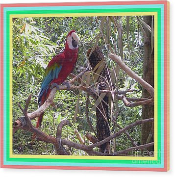 Wood Print featuring the photograph Artistic Wild Hawaiian Parrot by Joseph Baril
