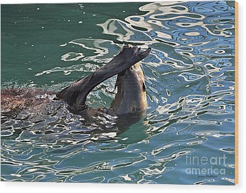 Artsy Sea Lion Wood Print by Susan Wiedmann