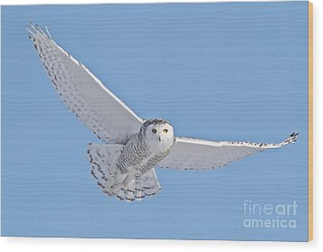 As My Spirit Soars Wood Print by Heather King