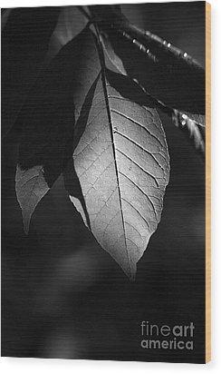 Ash Leaf Wood Print