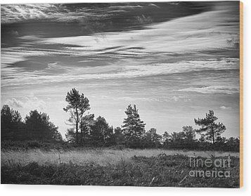 Ashdown Forest In Black And White Wood Print by Natalie Kinnear