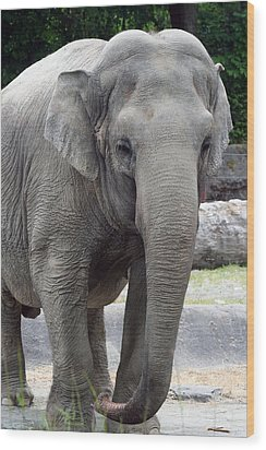Wood Print featuring the photograph Asian Elephant by Bob Noble Photography
