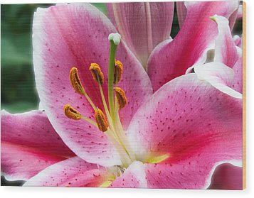 Asian Lily Wood Print by Michael Porchik