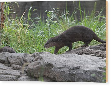 Asian Small Clawed Otter - National Zoo - 01135 Wood Print by DC Photographer