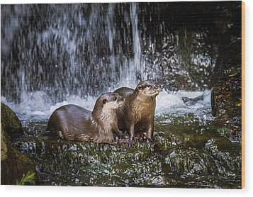 Asian Small-clawed Otters Wood Print by Paul Williams