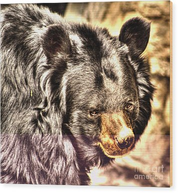 Asiatic Black Bear Wood Print