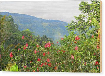 Asiatic Hibiscus Wood Print by Tina M Wenger
