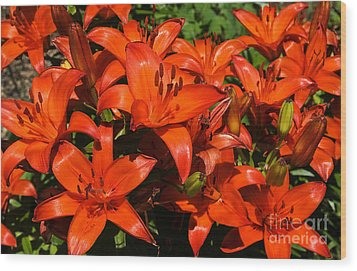Wood Print featuring the photograph Asiatic Lily by Sue Smith