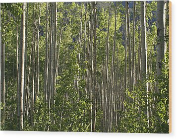 Aspen Along Independence Pass  Wood Print by Jacqueline Russell